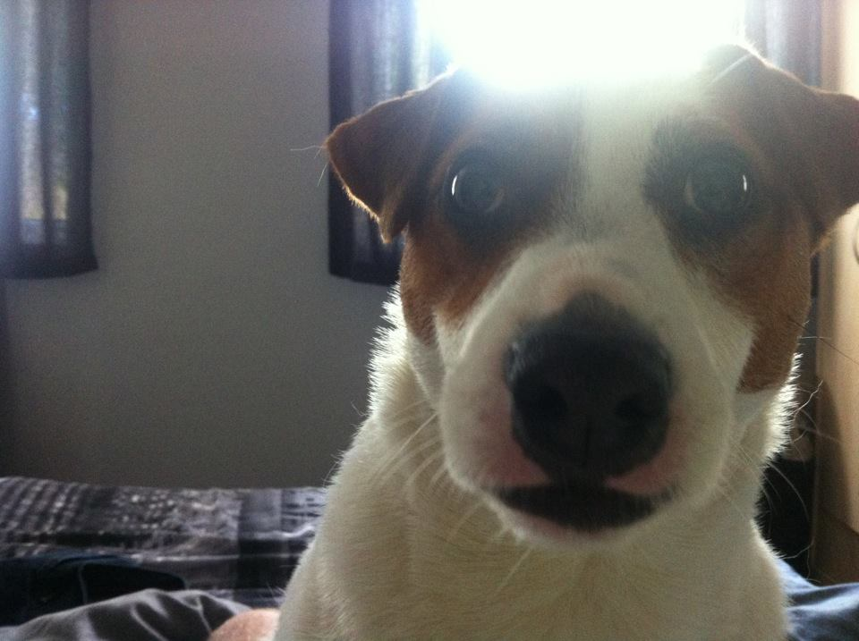 lidenbokvalour general today corgi mutant loves live corner pets pictures your super post busy streets rained