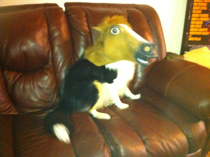 vandole general today corgi mutant loves live corner pets pictures your super post busy streets rained