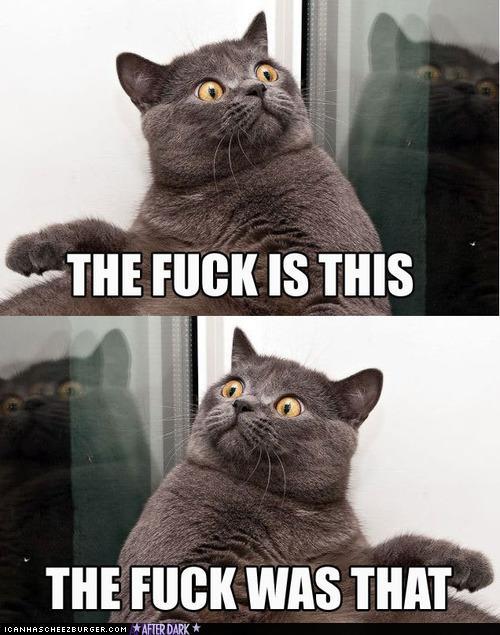 ragns meme cats
