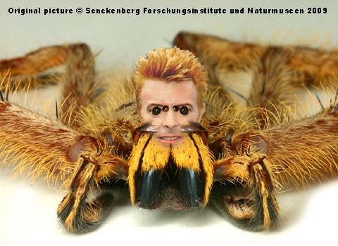 kerberoz spiders