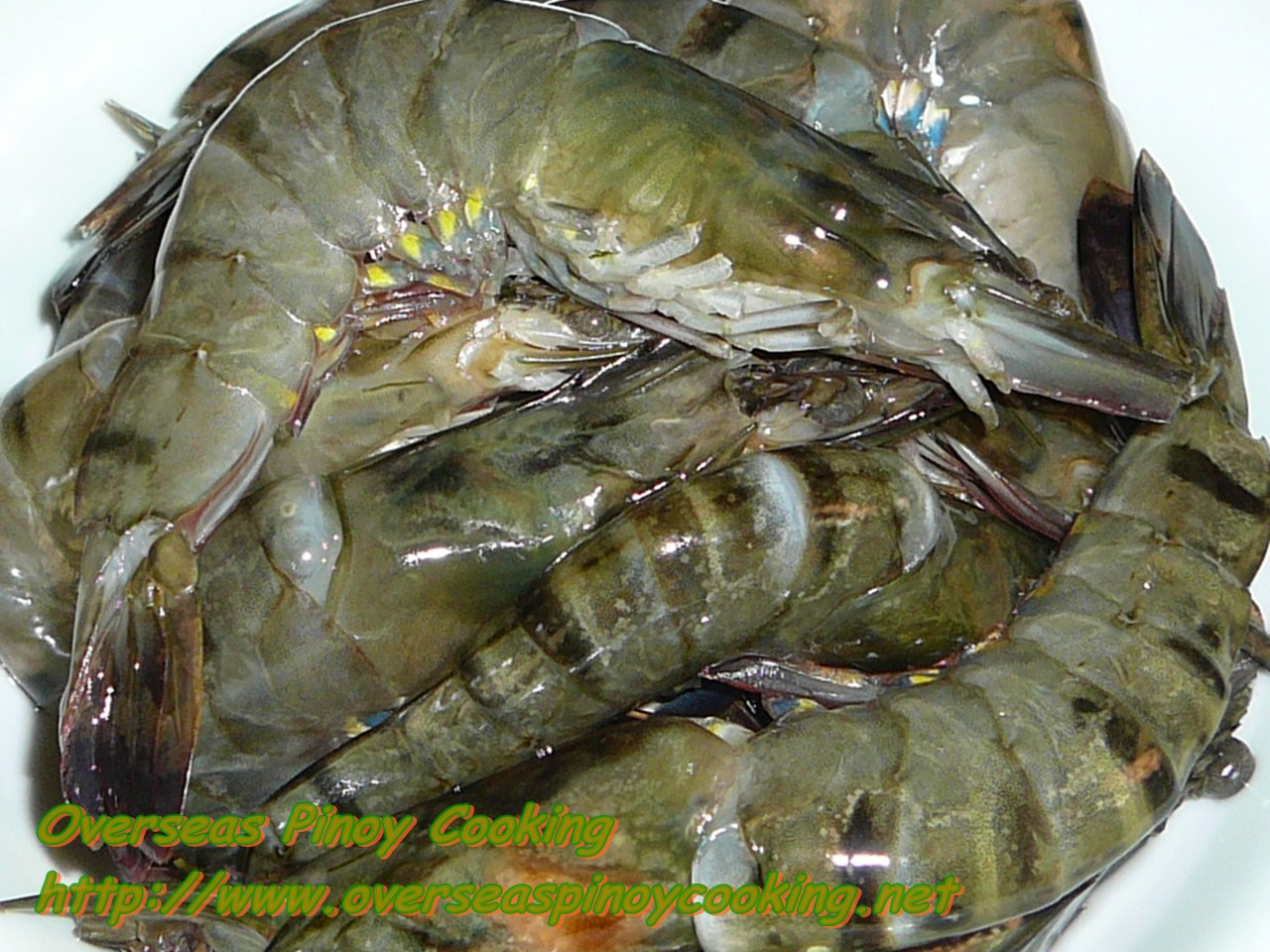 rocl  shrimp bomb without talk real shell
