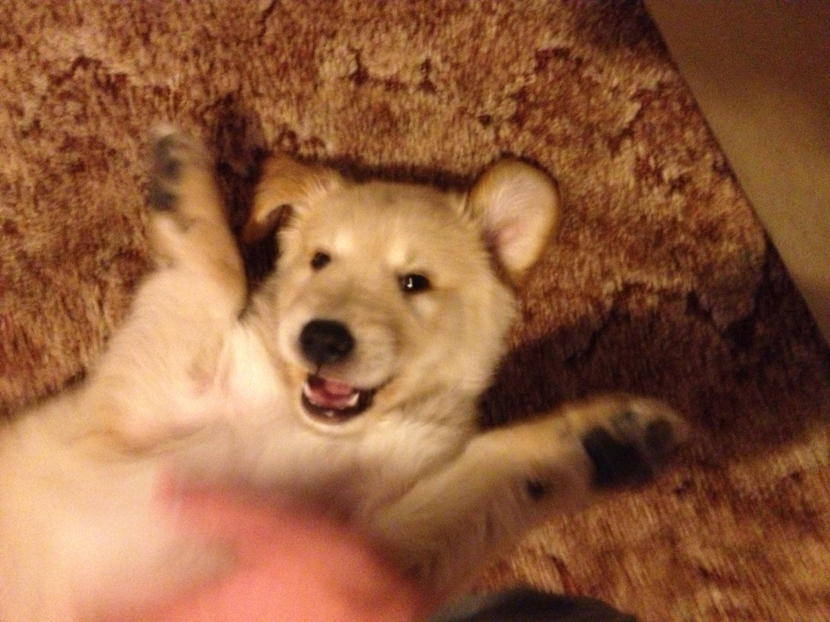 fievel general today corgi mutant loves live corner pets pictures your super post busy streets rained